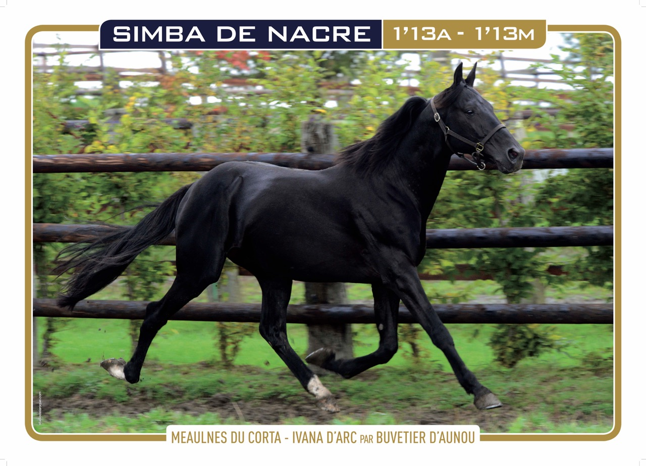 SIMBA DE NACRE_2